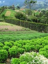 hierbas-aromaticas-el-uvito