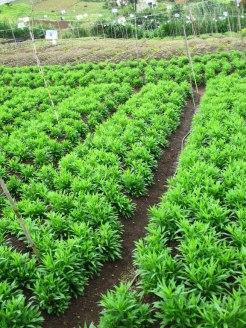 hierbas-el-llano