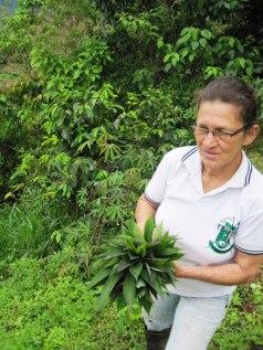 hojas-de-yuca-la-aldea